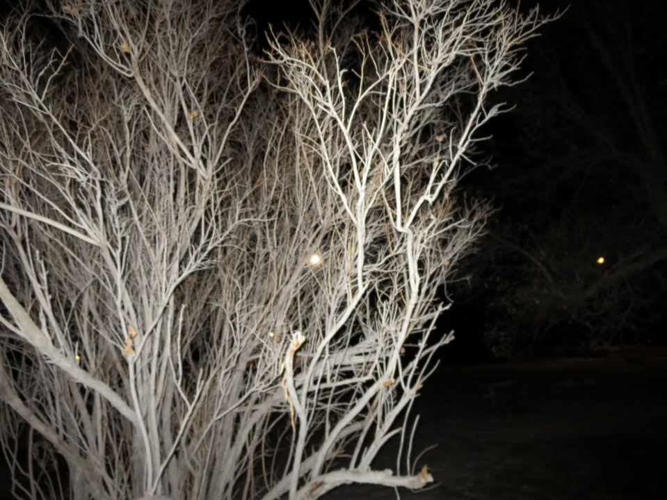 Frozen Tree in the Park
