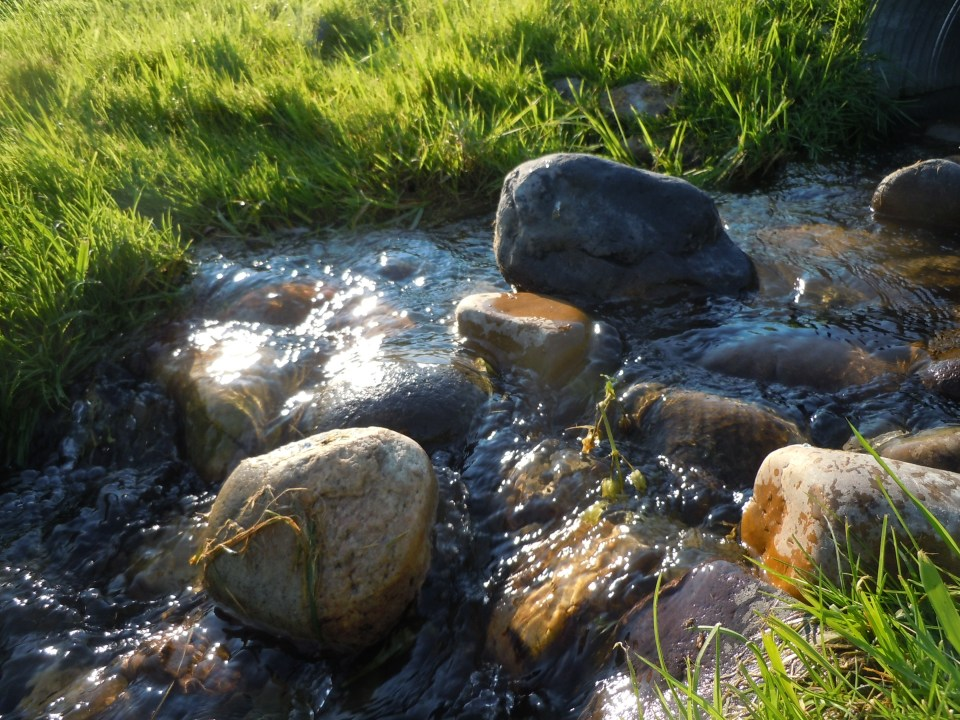the creek in august